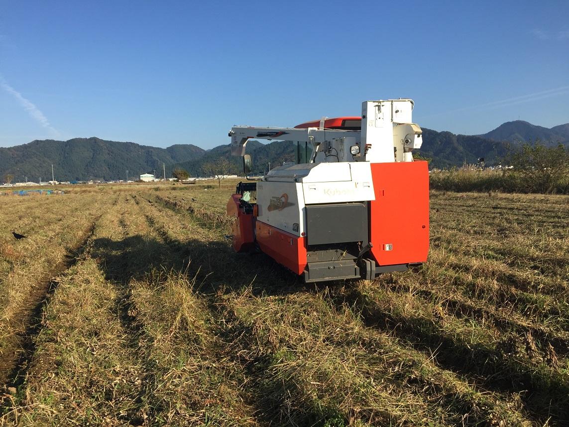 大豆刈り取り 最終日
