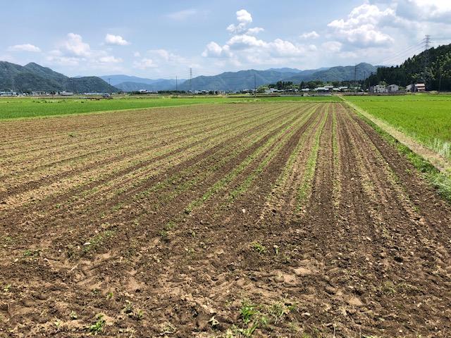 大豆 蒔き直し