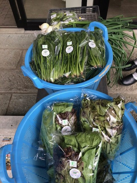 有機野菜の販売開始