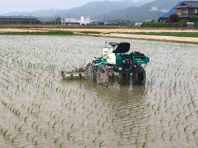 坂井市 農家のNさん