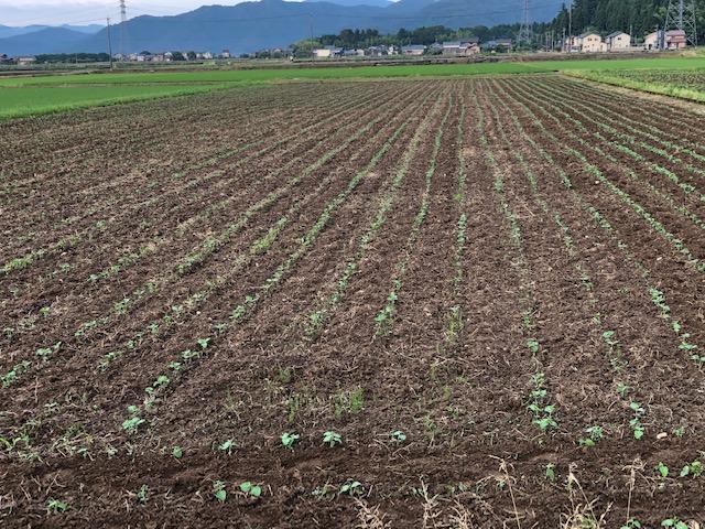 農作業の一日